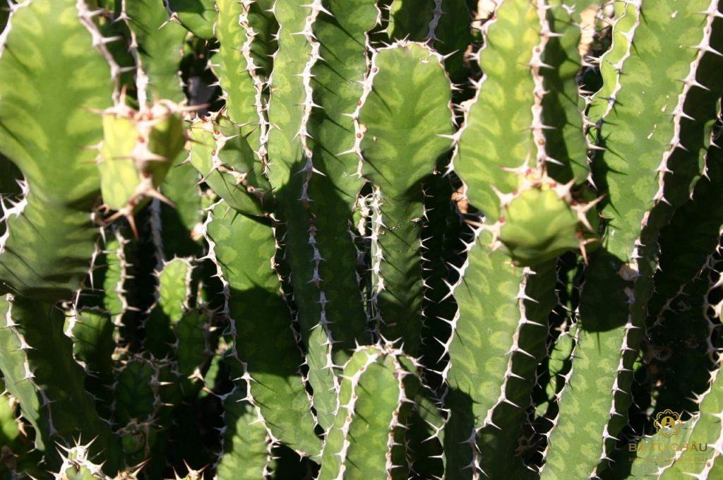 5 bài thuốc thần trong vườn nhà 4
